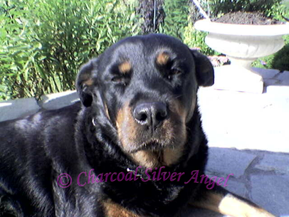 Unsere Rottidame Lotty