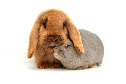 Konijnenopvang Het Knaagtandje konijn konijnen