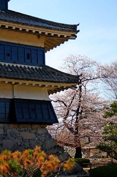 Le Inui-Kotenshu (le donjon secondaire d el'aile Nord) et ses ishi-otoshi défensifs à la base du premier mur en bois (avancées en oblique)
