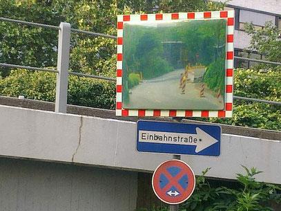 SICH SELBST IM RÜCKSPIEGEL BETRACHTENDER TAUSENDFÜßLER (c) De Toys, 30.5.2012 @ Downtown Düsseldorf (www.DDORFFOTOS.de & www.BeNoTourist.de)