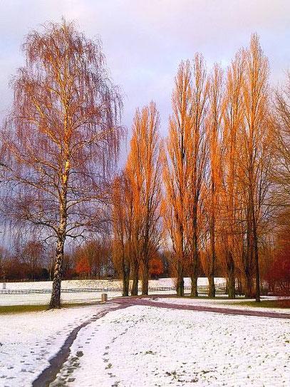 SCHNEEBIRKE (c) De Toys, 20.12.2011 @ Deichsee (Südpark)