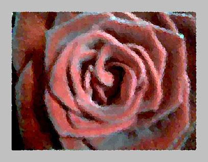 """ROSENOHR"" (c) De Toys, 24.1.2008 (Gertrude Stein: ""1 Rose ist 1 Rose ist 1 Rose"")"