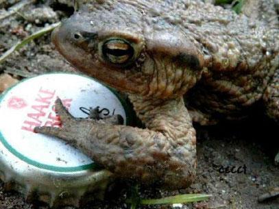 Sammelnder oder durstiger Frosch?
