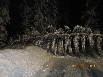 Schneebruch 18.12.10 20.19 Uhr, zwischen Albertsberg und Carolagrün,                          Foto: FFW Vogelsgrün