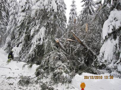 Schneebruch 20.12.10 13.38 Uhr, zwischen Albertsberg und Carolagrün,                        Foto: FFW Vogelsgrün