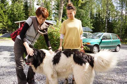 愛犬どもがわんさかと…こやつらは甘えた愛玩犬どもではありません。たくましい猟犬たちです。