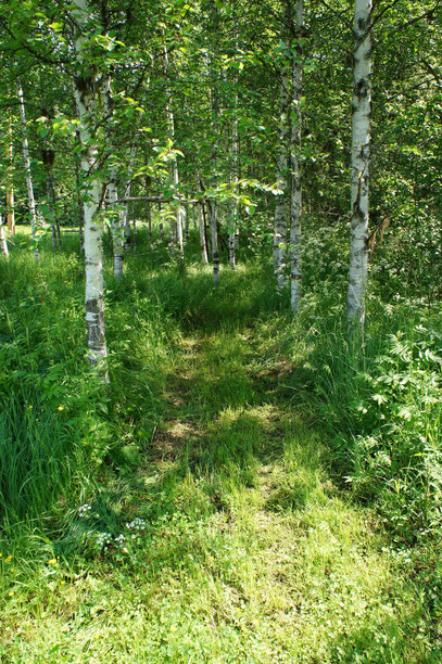 みみずを掘りに、森の入り口へ・・・