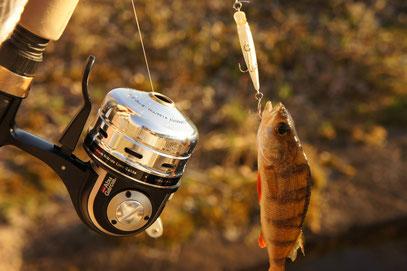 ただ釣り、 (だから、おおきさにあらず。 ルアー長・約3cm)