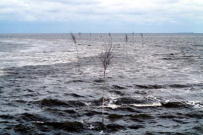 Pricken im Norderneyer Wattfahrwasser