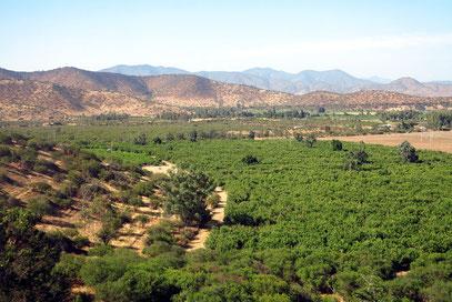 Mediterraner Anbau in der Talung von Santiago de Chile