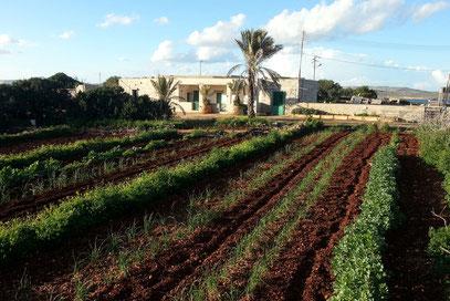 Landwirtschaft oberhalb der Hotelanlagen