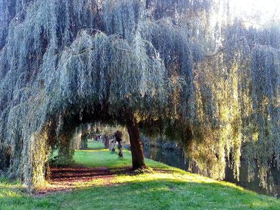 Spaziergang in der Nähe von Schloss Blankensee