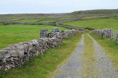 Typisch kleingliedrige Landschaft mit Steinwällen