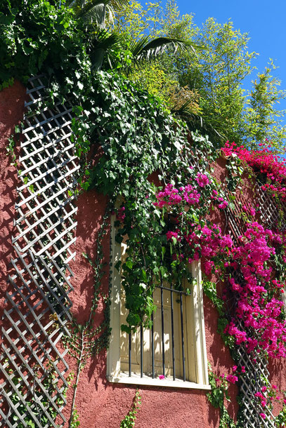 Bougainville an einer Hausfront