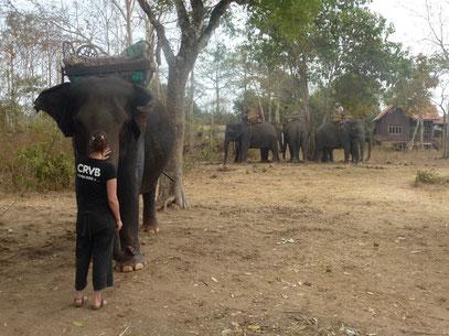 CRVB et la patrouille des éléphants? - envoyé par Nelly