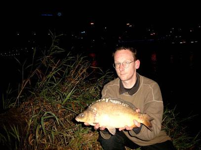 September 2010: Unterweser, Bremen-City. Noch klein und schon verletzt,        Schwanzflosse, vermutlich durch Schiffsschraube.