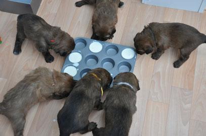 Die süßen 6 beim Milch trinken :)