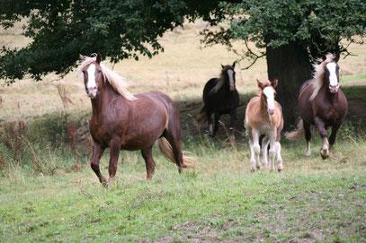 Felina und ihre Herde