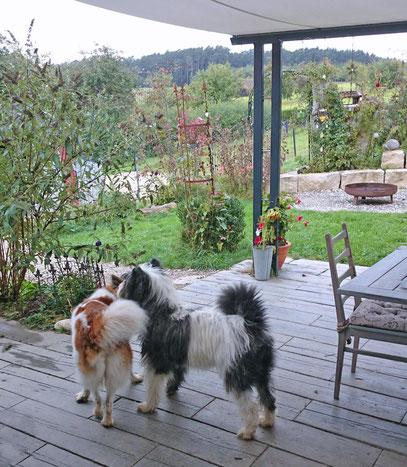 Ratgeber Hundeerziehung