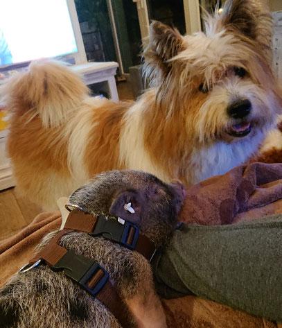 ELO® Pookie und der kleine Schweinehund