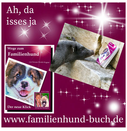 Rasse_Mischling_Familienhund
