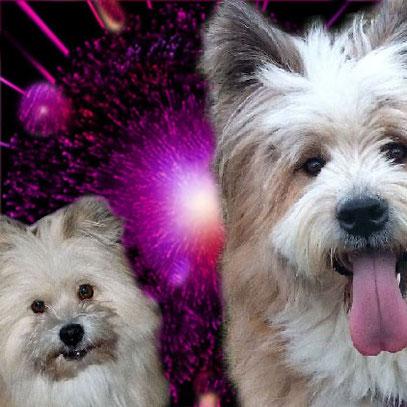 Hund Silvester Krachen Schüsse