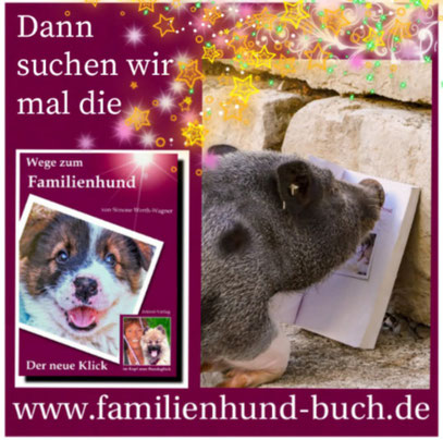 Buch Erziehung Welpe Familienhund