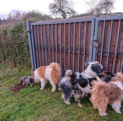 Vier Hunde und ganz links der kleine Schweinehund