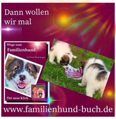 Buch_Hundeschule