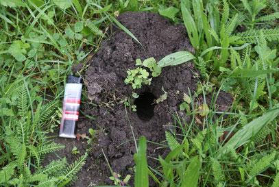 Asseln Im Garten gartenmitbewohner schädlinge im öko garten flausensausen