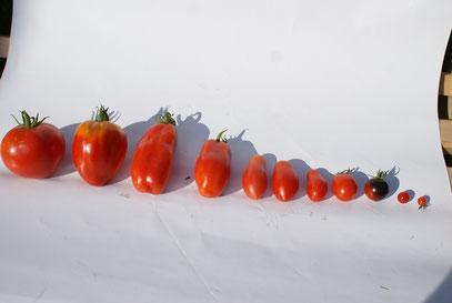 Rote Größenparade von 15cm - 5mm