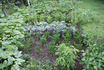Gemüsefeld 1 im August (vergleich mit juli)