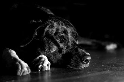 Max - Foto 1 - Sorrow