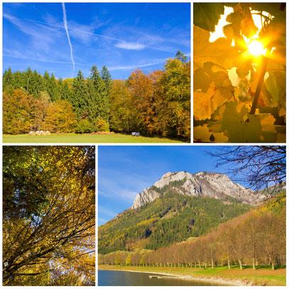 Conny - Foto 5 - Facetten des Herbst