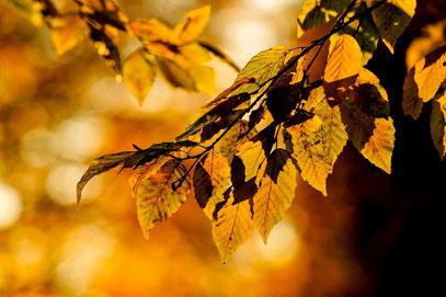 Gerald - Foto 10 - Herbstlich