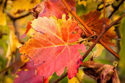 Manuela - Foto 1 - Farben im Herbst