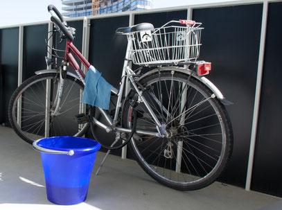 Sarah - Foto 2 - Frühlingserwachen - auch Fahrrad putzen gehört dazu