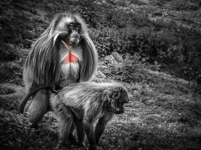 Ralf - Foto 6 - (Primaten-) Verkehr