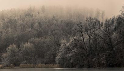 Martin - Foto 5 - the fog