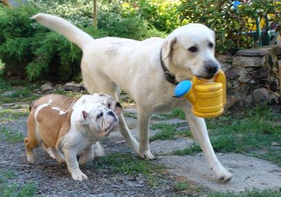 Освальд и Октавия хотят поливалочку :)