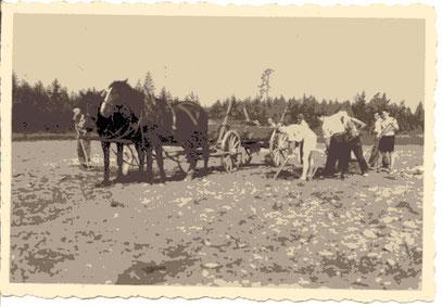 Pferdegespann von Arthur Tärsiep