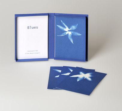 Yucca Blüten auf blauem Papier.