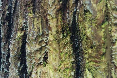 Détail de l'écorce. Mousse sculptée, résinée et peinte