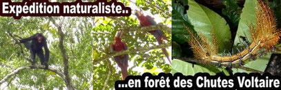 découverte de la nature en forêt de guyane avec un guide naturaliste