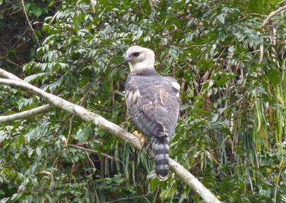 Observation de la faune de Guyane