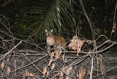 ma observé sur le lac de Petit Saut en Guyane avec Nature de Guyane