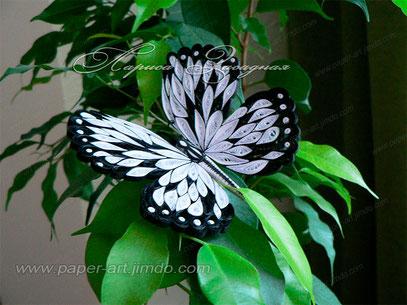 курсы онлайн, мастер класс, квиллинг, бумажные полосы, бабочка, лариса засадная, картины квиллинг, quilling, butterfly