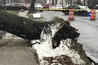 High winds caused significant damage in Fanwood