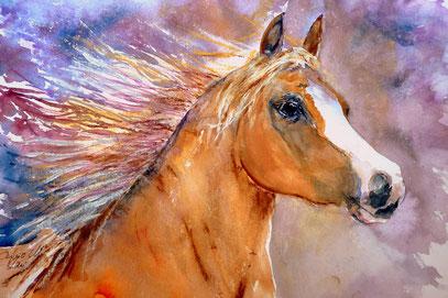 Beauty Arabian Mare