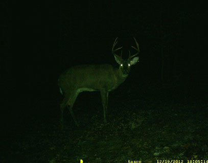 Black Buck 2012